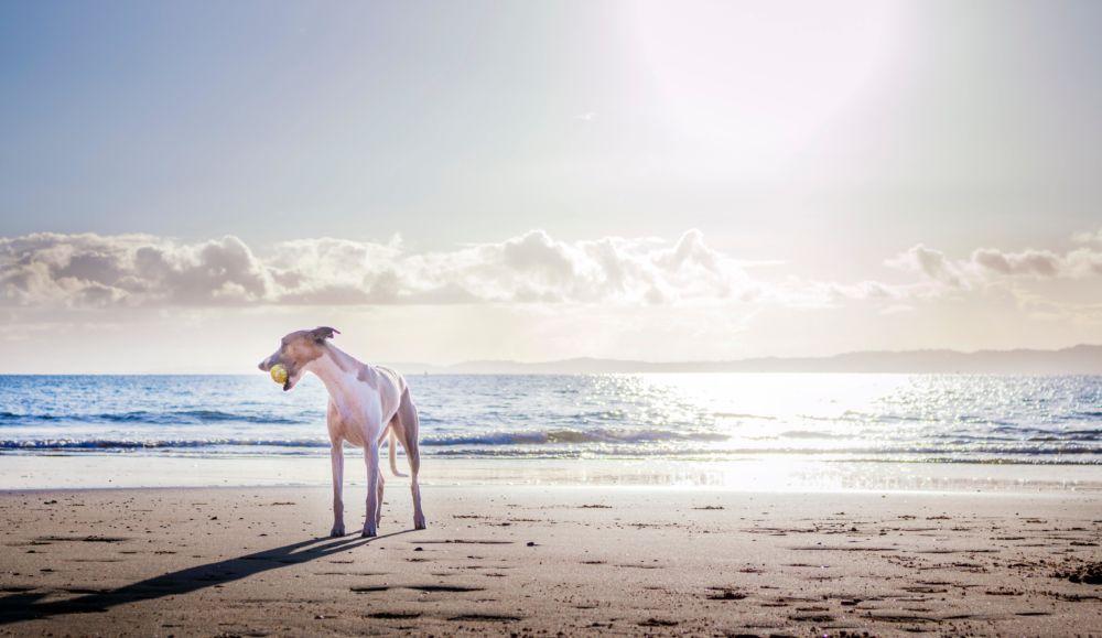 Animal ball beach 2112010