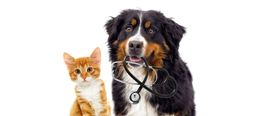 Dog Cat with Stethoscope